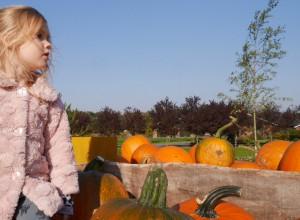 Halloween_pompoen uithollen