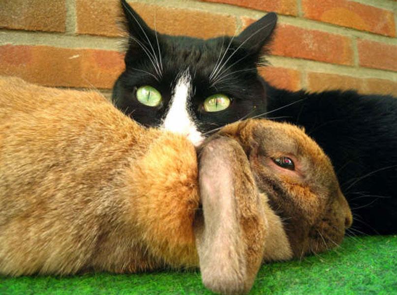 kattenoppas cat lucky